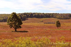 Big Meadows Fall