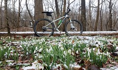 2019 Bike 180: Day 28 - Snowdrops In The Snow