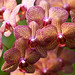 A Gaggle of Orchids by WilliamND4