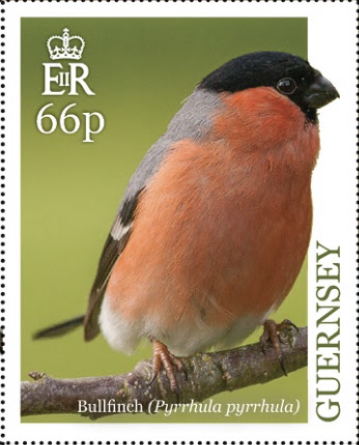 Guernsey - National Birds: Bullfinch (April 1, 2019)