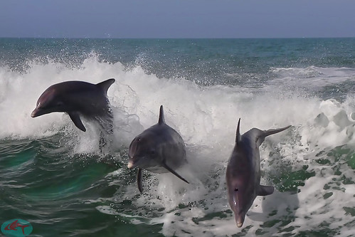 Dolphins having fun