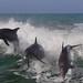 Dolphins having fun by die Augen