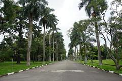 The Botanical Garden of São Paulo, Brazil.