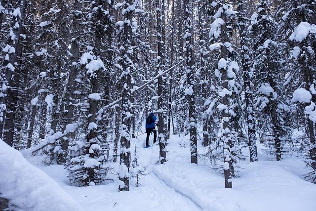 Snowshoeing - Gypsum Ridge - Feb 2019-2
