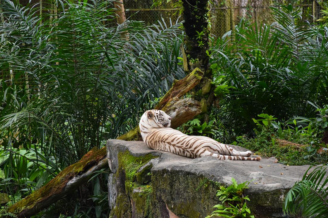 Singapore-zoo-(53)