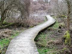 Un chemin tortueux - Photo of Plobsheim