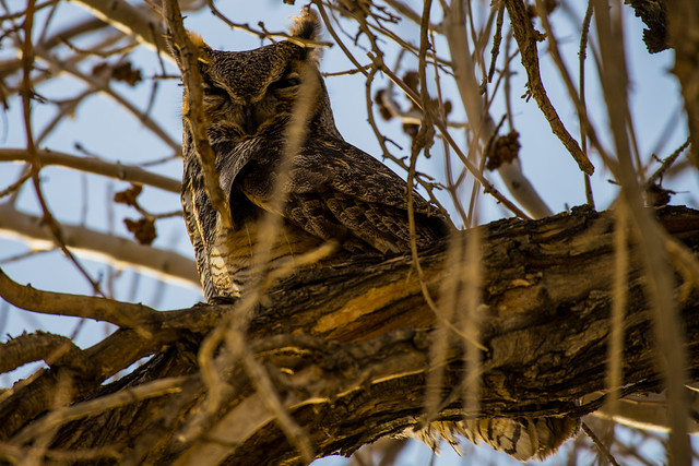Great Horned Owl, Nikon D850, AF-S Nikkor 200-500mm f/5.6E ED VR