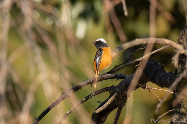 20190224-kingfisher-DSC_1798