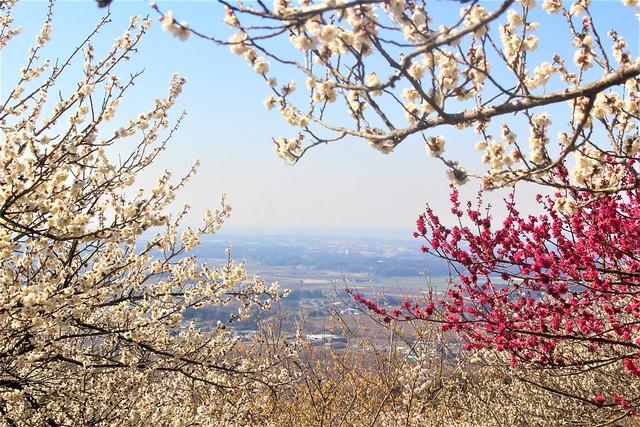 tsukubasan-gosyuin044