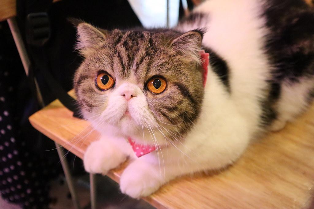 Caturday cat cafe (20)