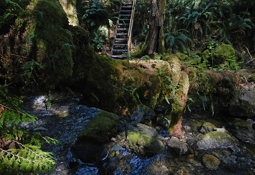 Stairs at Sooke Potholes Park on Vancouver Island, Canada