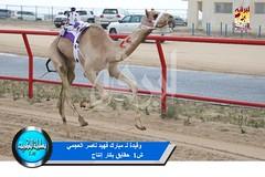 📷 صور سباق الحقايق (الأشواط العامة) ختامي الكويت صباح 9-2-2019