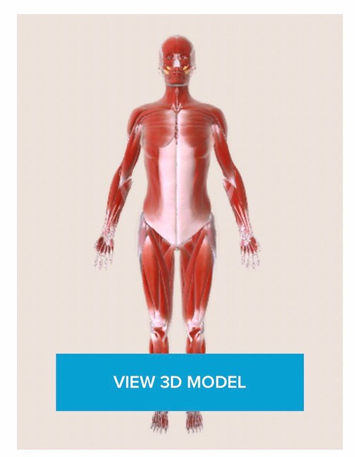 healthline.com muscular system body map