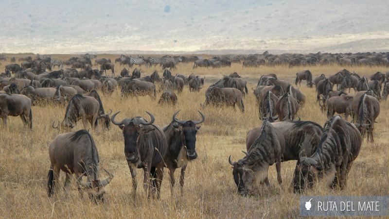 Animales hacer un safari P1150051