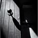 Fotografía Estenopeica (Pinhole Photography) by Black and White Fine Art