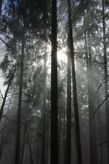Nebel Sonnenstrahlen