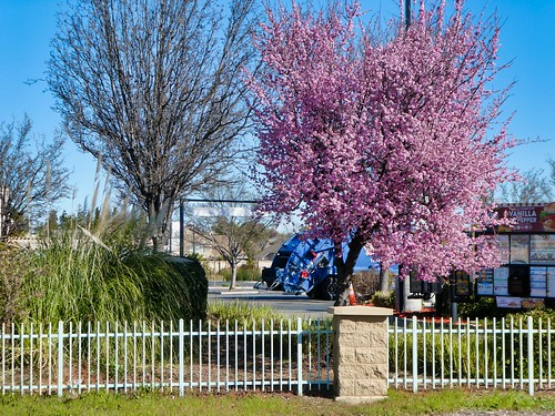 2019-02-21 - Nature Photography - Trees - Signs of Early Spring, Set 4