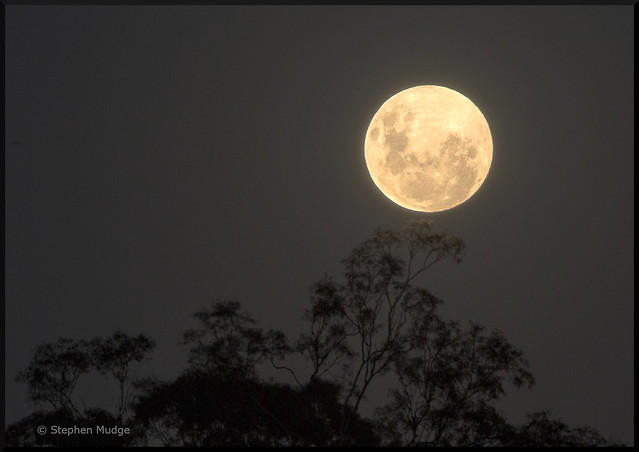 Moonrise over the Gum Trees