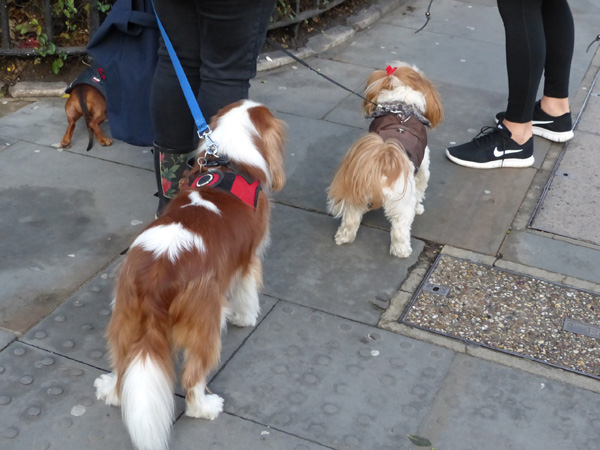 deux chiens de noel