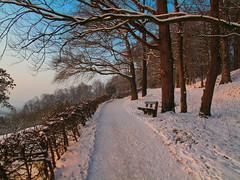 A winter walk above Linz