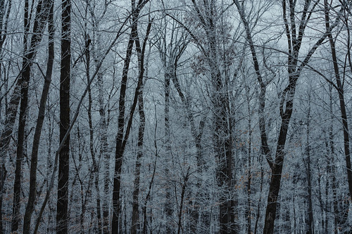 Foggy Winter Morning at Wild River State Park, Minnesota