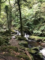 Owengarriff River, Killarney National Park