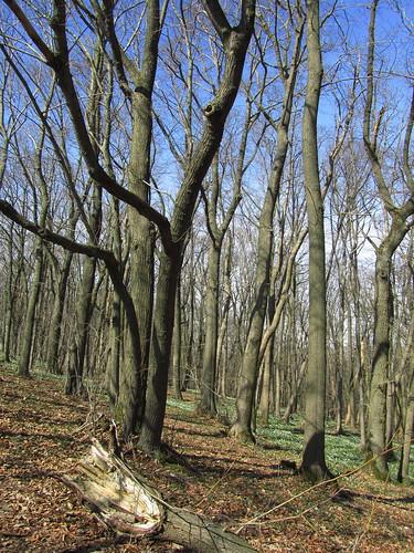 20110321 0208 355 Jakobus Wald Bäume