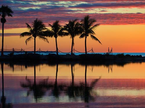 morning dawn sunrise sun rise twilight orange sky silhouette palm fronds trees biscayne bay gulf stream