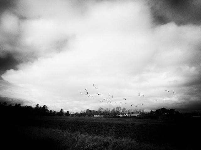 just a flock of birds