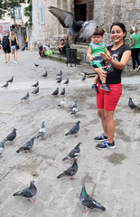 The Pigeons Of Plaza De San Francisco