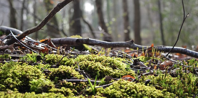 sunshine on the woodland floor