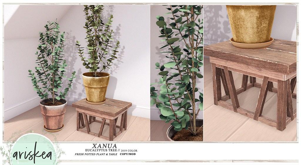 Saturday Sale – Xanua- Ariskea