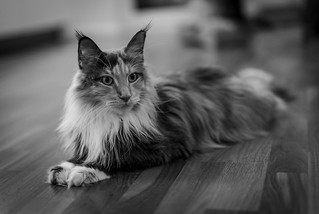 024 - cats cats cats- A9506534 | by NEX69