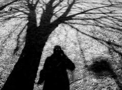 Shadow and the tree.