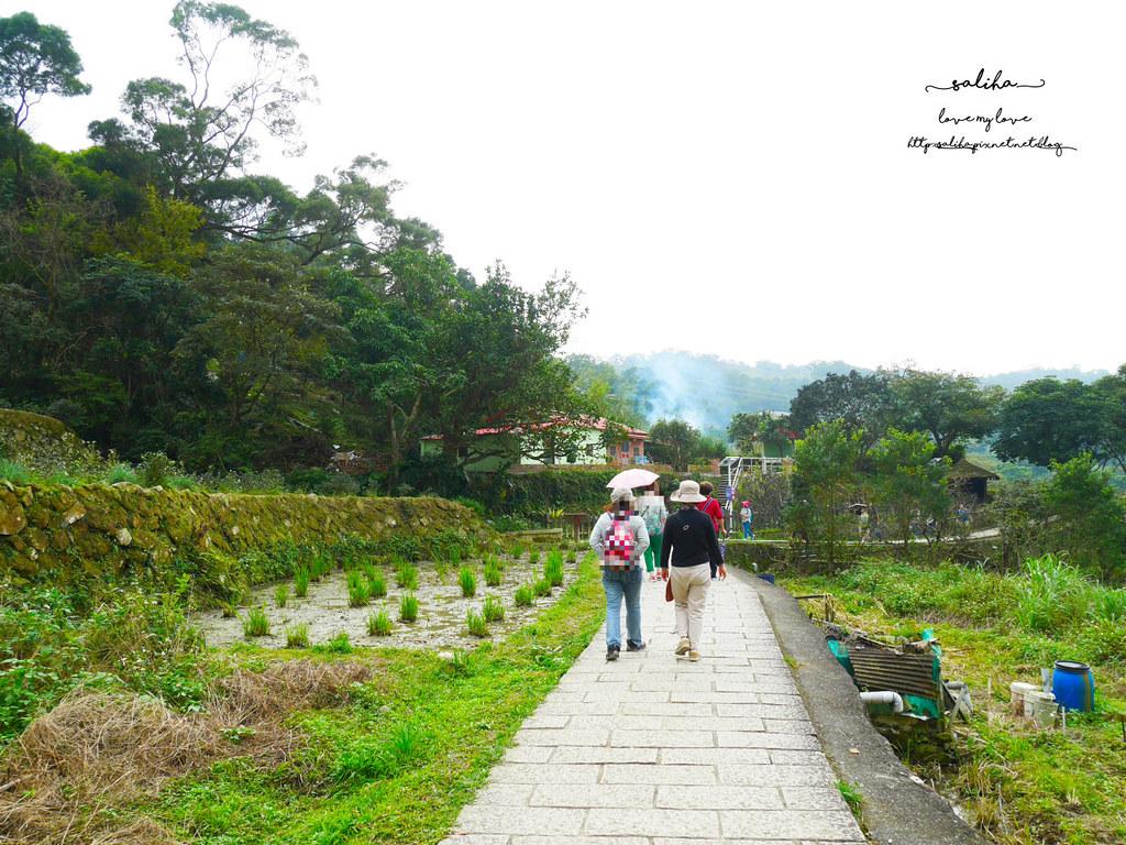 台北貓空一日遊踏青親子登山景點推薦樟樹步道 (1)