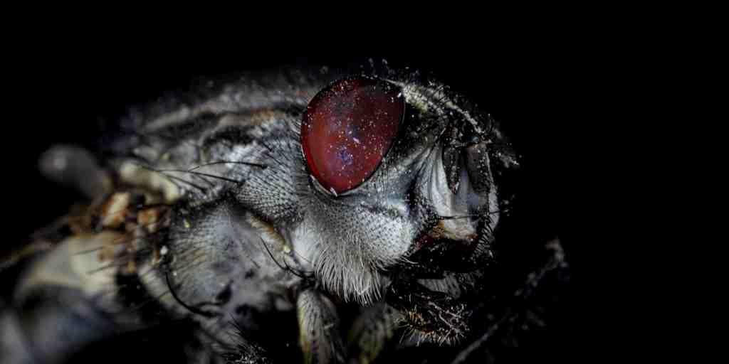 des-moustiques-modifiés-contre-virus-zika