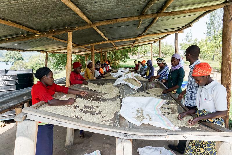 Gishamwana Island, Kivu, Rwanda. Photo by Claudia Bellinzoni