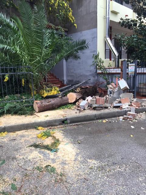 albero caduto turi (4)