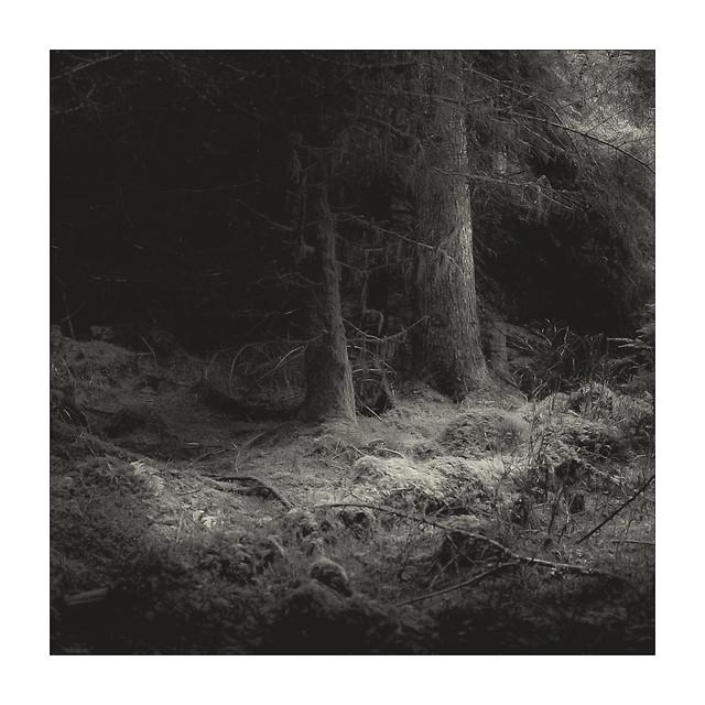 Welsh Woodland