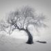 Frandy Tree