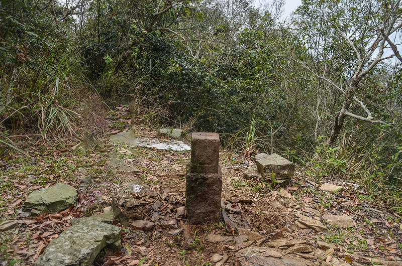 大原山次中(04)山字森林三角點(Elev. 1114 m) 2