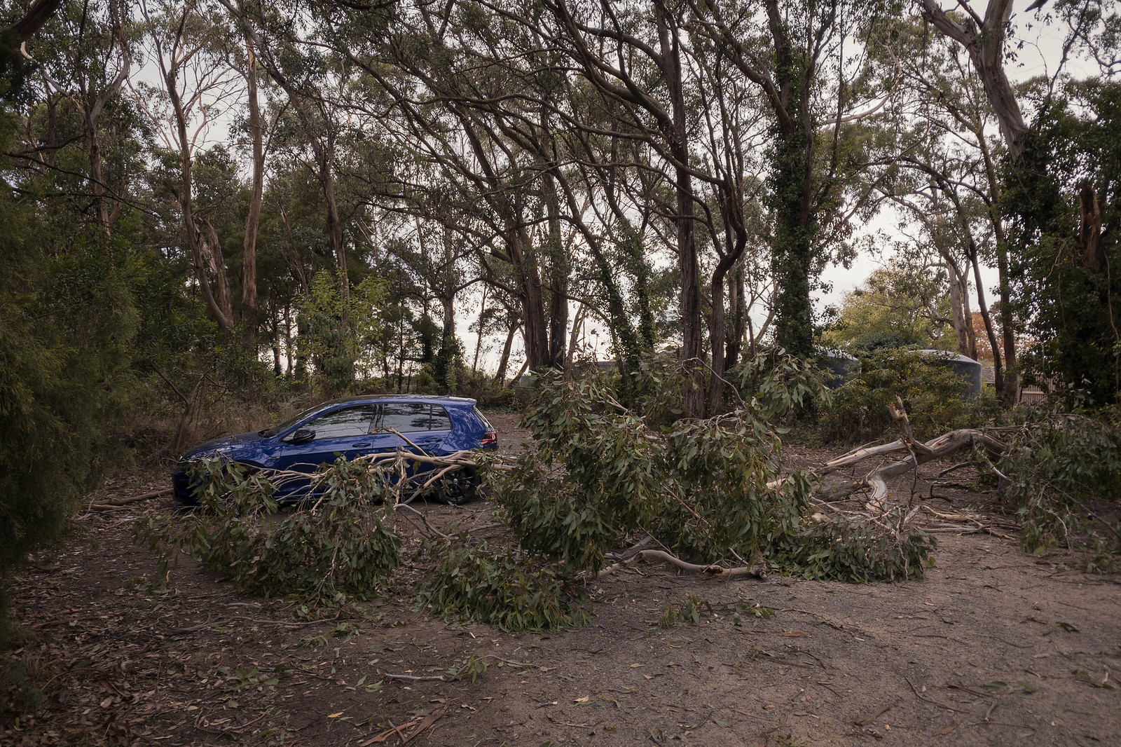 Fallen tree in front of blue car in the Australian bush