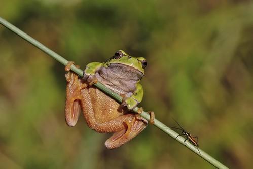 Bug against Frog