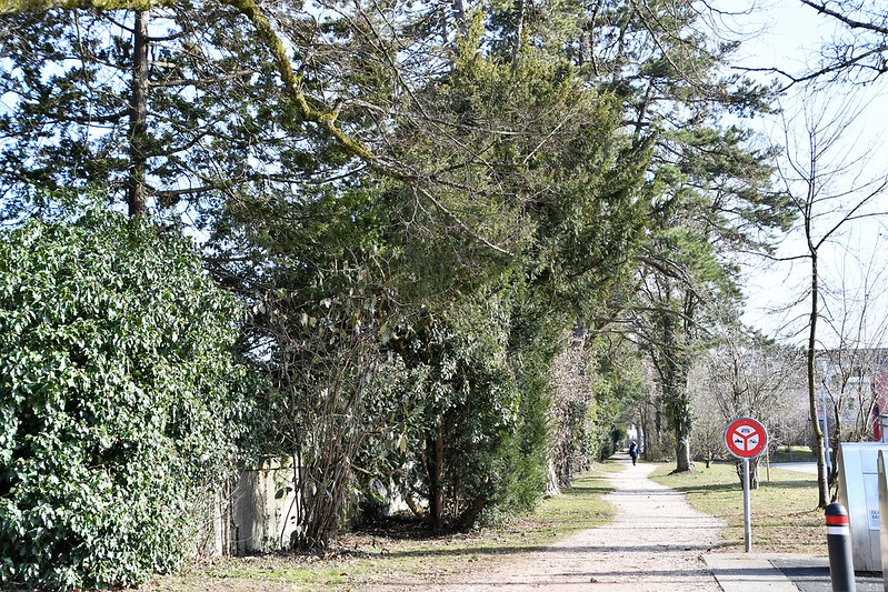 Solothurn Cemetery 23.02 (1)