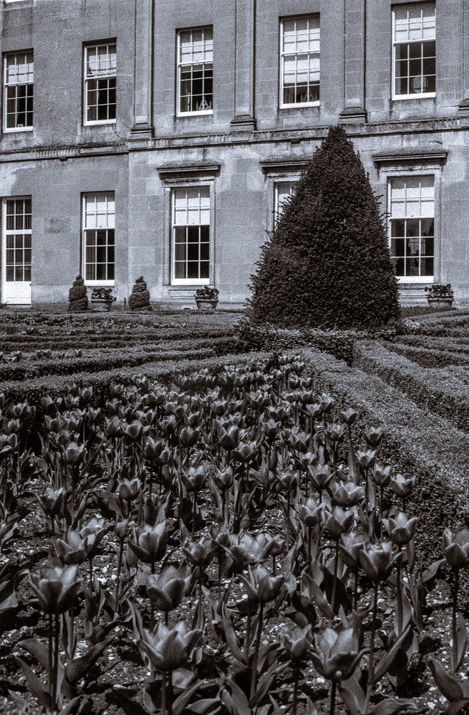 Tulips and Topiary, Sledmere House - Download Photo - Photo Search