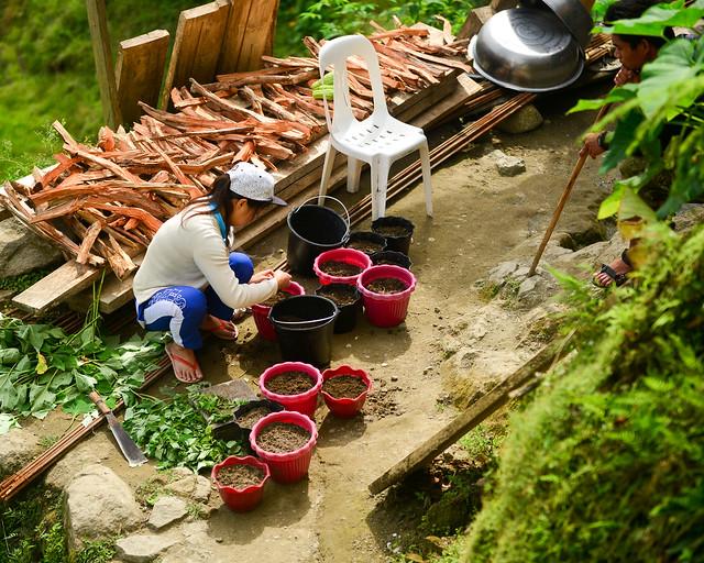 Trabajadores separando grano de arroz en Batad