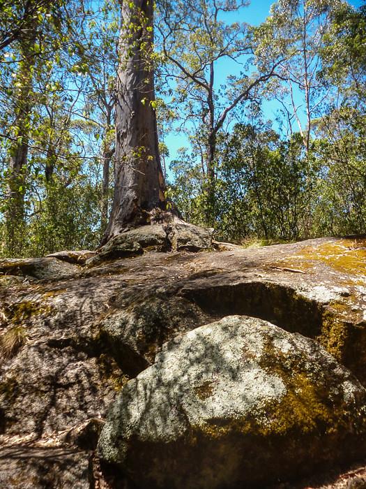 Split rock Tree