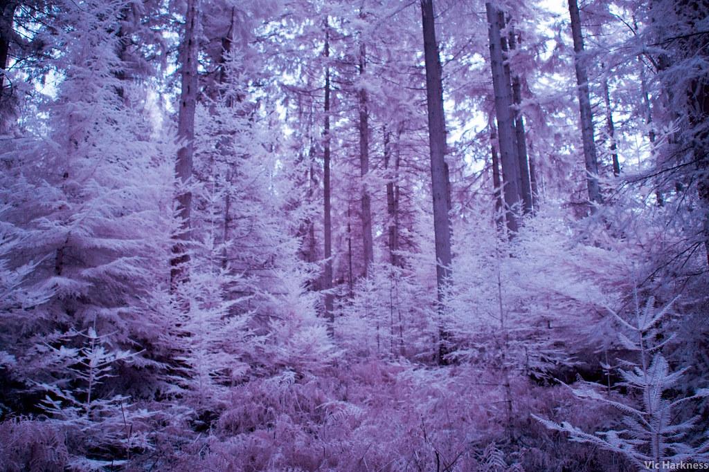infrared-1