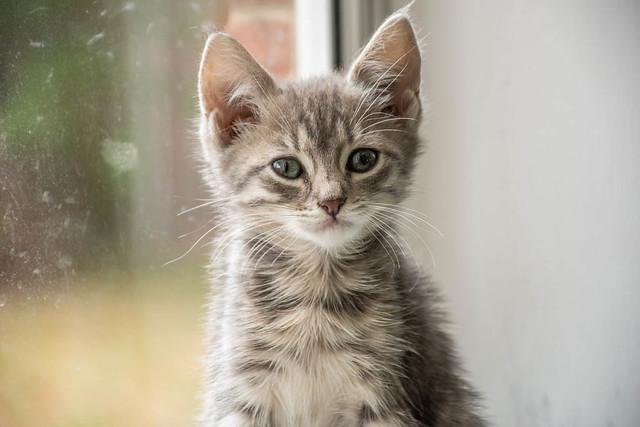 Heather's Kitties