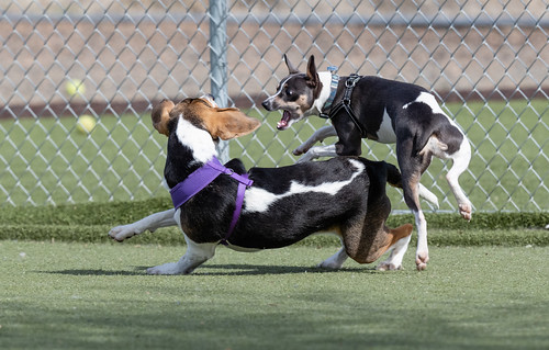 dogs_wrestling-20190323-100-2